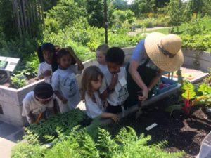 Gardening at the Botanic Gardens